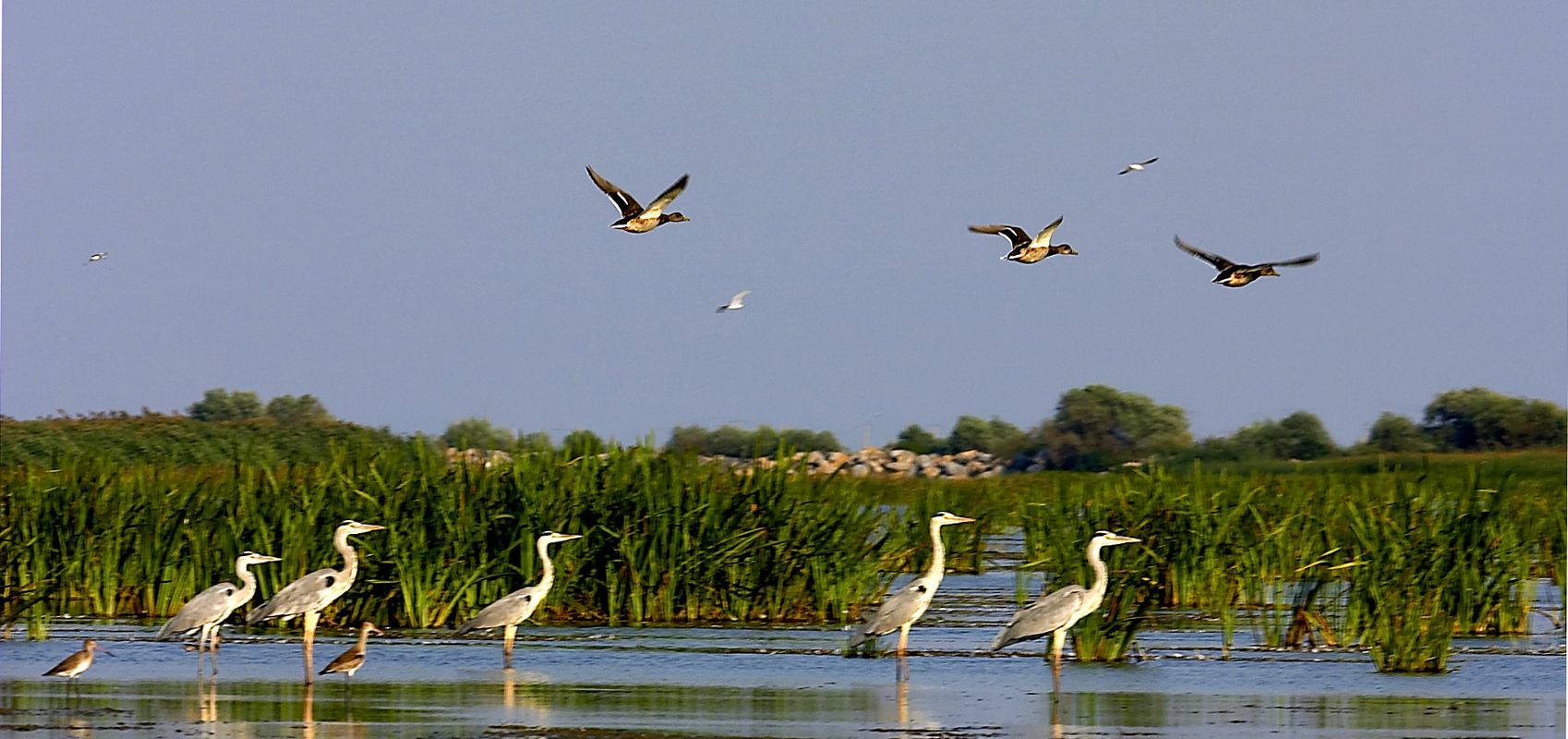Danube Delta And Black Sea Ambasador Travel Agency